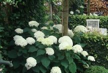 Trädgård Callmar
