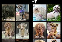 Rescue Dogs / Spartadog supports dog rescue.  Every dog deserves a helping hand and a good home
