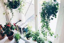 HOME: Greenery