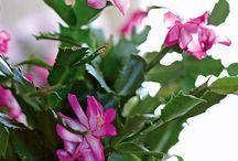 Suculentas y Cactus bellas!