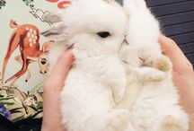 The cutest animals in the whole world