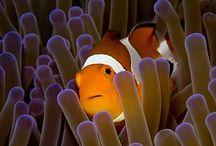 Ryby - Slanovodní