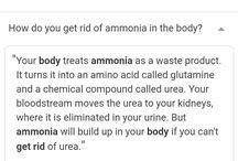 doggie ammonia