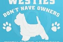 Truman is my westie / by Jean Panyard-Davis