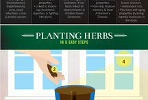Herb Gardening for Beginning Gardeners / Growing herbs is fun and easy! Rosemary, basil, thyme, sage, oregano, chives, dill, and more!