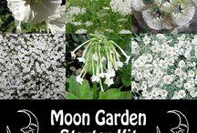 My White Garden