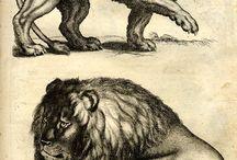illustrations vintage