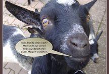 Kostenlose Fotos / Bilder / Sprueche Tiere - Legakulie / Sie finden auf dieser Seite #http://kostenlose-fotos-bilder-sprueche-legakulie.de/ #lizenzfreie, weil von mir selbst fotografierte und verschönerte #Bilder, kostenlos zum Download. Thema: #Guten #Morgen #Grüsse http://kostenlose-fotos-bilder-sprueche-legakulie.de/impressum-agb.html