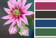 Color / All the pretty colors. Color pallets, color palettes, color scheme, color inspiration, color combinations, colors, colors ideas