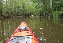 Nature of the Gulf Coast / With our sub-tropical climate, outdoor adventures are a year-round activity. Kayak down a peaceful river. Take an eco-tour to see local flora and fauna, including several hundred threatened or endangered species. Slow down and enjoy the view.