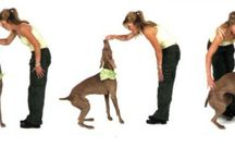 Dogs / Animal Care & Pets Dogs