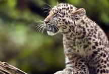 Endangered animals and conservation