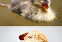 blije dieren