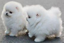 Animals / So adorable
