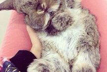 Bunny's❤️❤️❤️