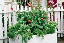 Raised Beds – ideas for your garden design in spring