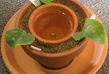 Stueplanter