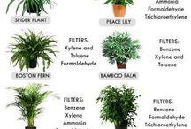 Oh Yea Plants