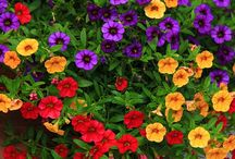Λουλούδια...