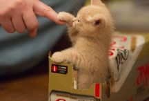 Rozkošné mačiatka