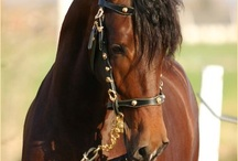 Paarden / horses