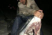 El Mar / Todo lo relativo a los secretos y particularidades de la fauna marina, especialmente los tiburones