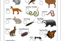 Language/English/Animals