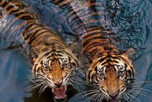 Beautiful Animals / Beautiful sentient beings, fantasy animals, awesome photography