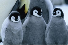 Penguins! / by Steph Romberger