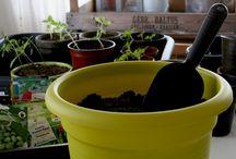 Taimikasvatus / Grow your own / Taimikasvatus alkaa jo tammikuussa ja jatkuu toukokuun loppuun. Potit ja purnukat tulevat tutuksi kylväessä ja kouliessa.