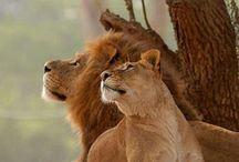 SA Animals