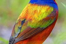 vogels / vogels in de natuur