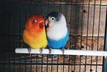 Birds ❤️