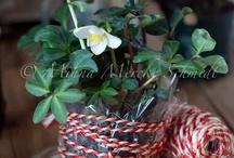 Flowers / by Vilma Vandell