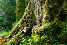 Natureza ..
