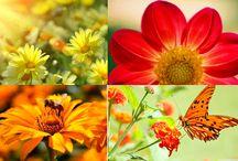 Analiza kolorystyczna: Ciepła Wiosna (Warm Spring)