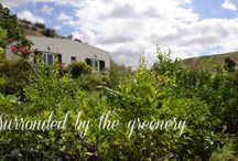 Organic Wine Farm Agriturismo tarantola
