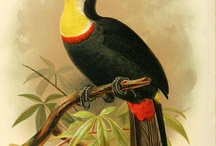 botanical / bird / toucan