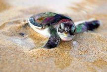 Tartarughe / Immagini di tartarughine