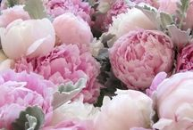 - Peonies and Roses- / ...ranunculus, freesias and other tender flowers..