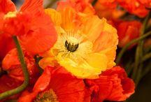 Colour love ... Orange / All the lovely oranges