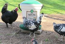 Chickens / by Charity Herb