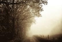 The Beauty of Fog