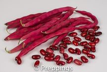 Shelling Beans / Search Preppings ingredient dictionary for a list of Fresh Legumes.  Search by cooking uses, flavor profiles and similar ingredients to inspire culinary creativity.