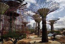 Vertical Gardens / by Sandy Fischler