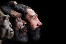 Ihmisen evoluutio