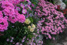 . Container gardening and window box. My little garden. /  My flowers.  Все, что выросло и цвело  у меня в саду.