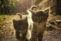 Plenty of cuteness