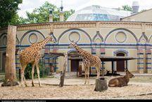 Berlin Zoo / Zoo de Berlin / Abraham Ulrikab and his group were exhibited for one month at the Berlin Zoo in October-November 1880. / Abraham Ulrikab et son groupe ont été exhibés au zoo de Berlin pendant un mois en octobre-novembre 1880.