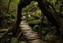 hátsó kert / erdei ösvények, lépcsők, kerítések, tisztások